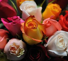 Roses in Assortment by studio20seven