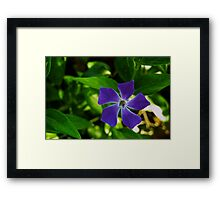 Purple Propellor Framed Print