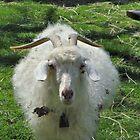 Billy Goat's Gruff by studio20seven