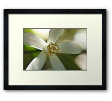 Painting a Flower Framed Print