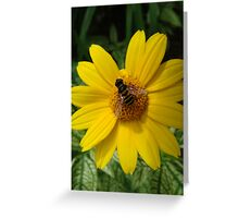Loraine Sunshine ~ Heliopsis Helianthoides and the Bee Greeting Card