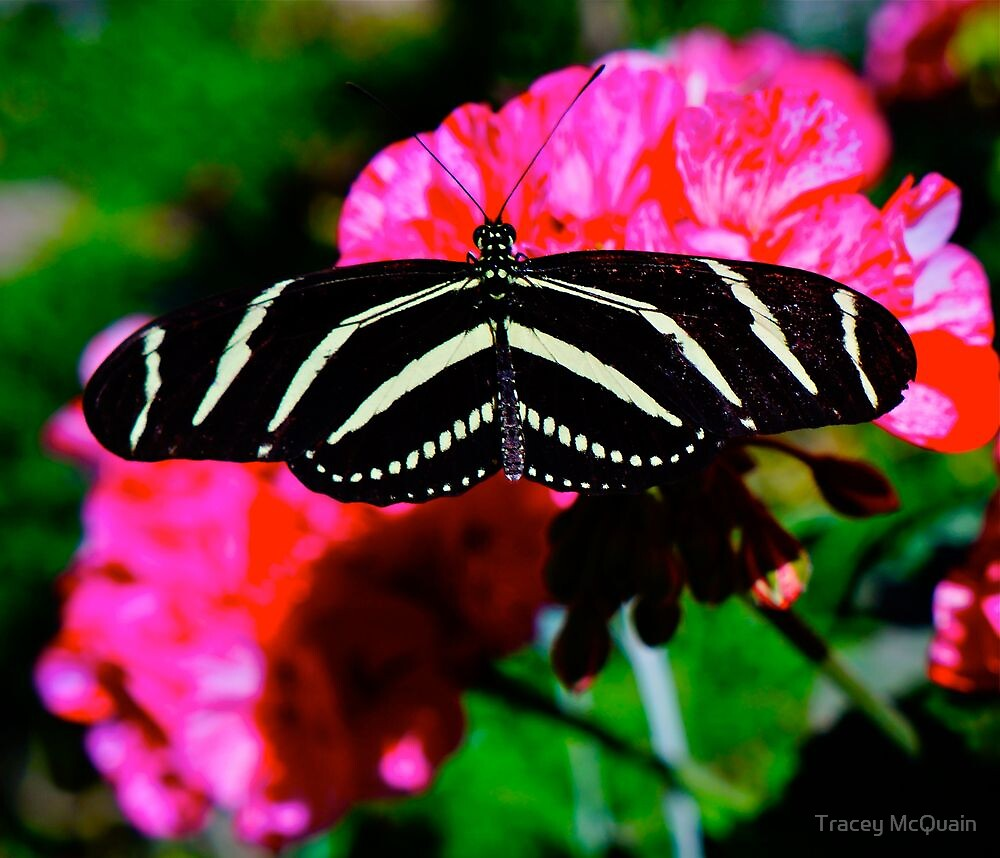 Butterfly by Tracey McQuain