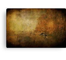 Sandpiper Piping Canvas Print