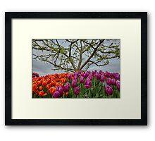 2013 Skagit Valley Tulip Festival Framed Print