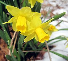 is it springtime yet? by LoreLeft27