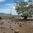Mangrove at low tide, Chalong Bay, Phuket by Kevin Hellon