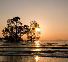 Sunrise over the Mangrove, Pak Lok, Phuket by Kevin Hellon