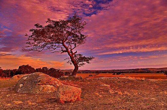 """Solitude At Sundown"" by Phil Thomson IPA"