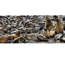 Cape Fur Seals Photographic Print