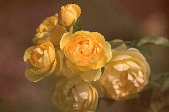 Romantic Roses by Joy Watson
