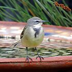 Sweet wagtail by Elizabeth Kendall