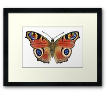 Peacock Butterfly (Inachis io) Framed Print