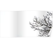 All relevant titles were pretentious, it's a bare cherry blossom tree with a white background, take it or leave it Poster