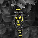 Yellow Dragonfly by xxkellywxx
