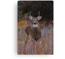 Prince - White-tailed Deer Canvas Print
