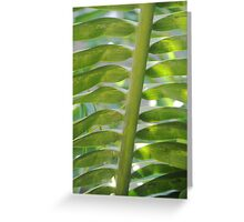 Turks and Caicos Palm III Greeting Card