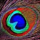 Peacock by lisa1970