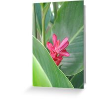 Turks and Caicos Tropical Pink II Greeting Card