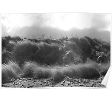Solway grass Poster