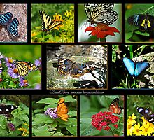 The Glory of Butterflies 2 by Diane E. Berry