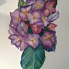 Hydrangea by ClaraM