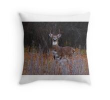 A regal stance - White-tailed Deer Throw Pillow