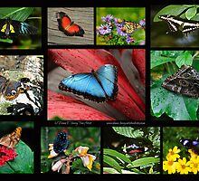 The Glory of Butterflies 1 by Diane E. Berry