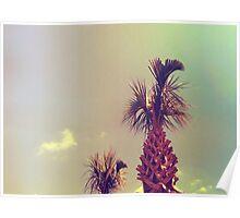 Sky Palm Tree Poster