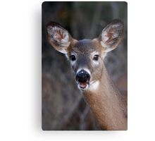 Well hello there! - White-tailed Deer Metal Print