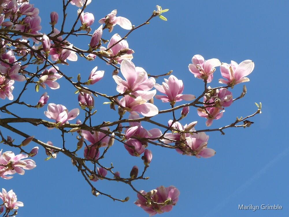 Against A Clear Blue Sky by Marilyn Grimble