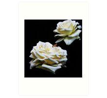 Wit Roos (White Rose) Art Print