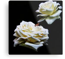 Wit Roos (White Rose) Metal Print
