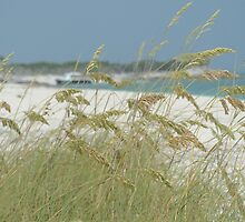 Turks and Caicos Sea Oats by studio20seven