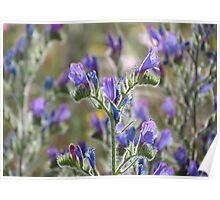 Purple Wildflowers in Sunlight, Sierra Espuna Poster
