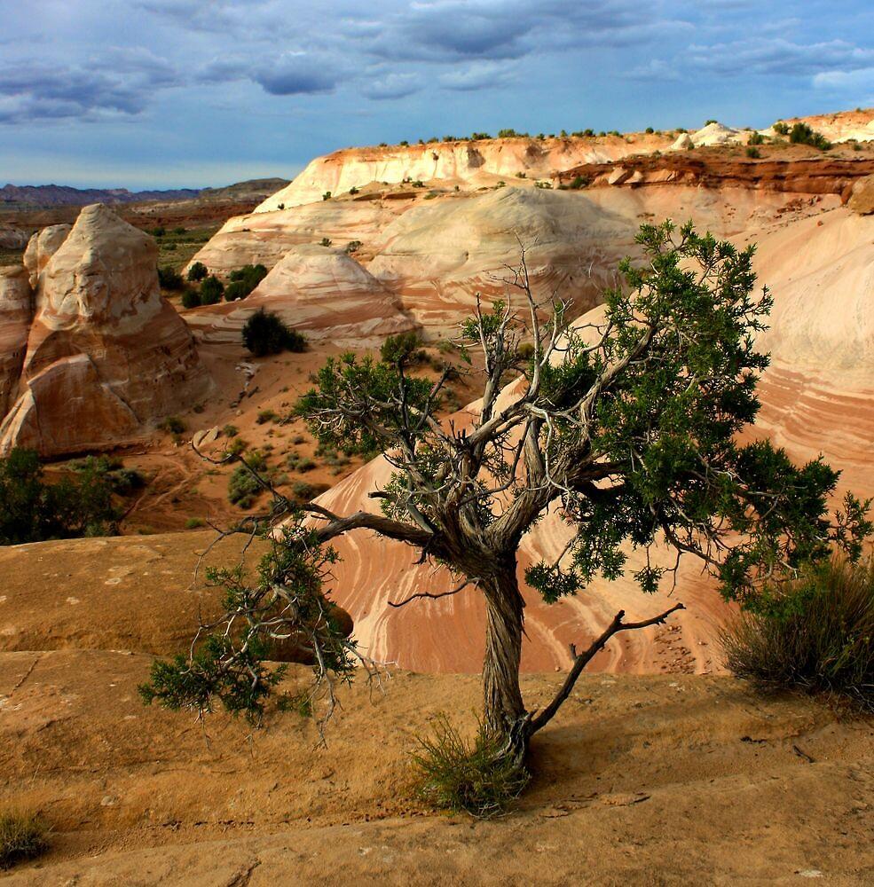 Escalante Tree by Gina Dazzo