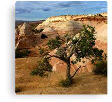 Escalante Tree Canvas Print