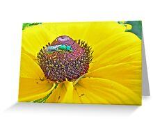 Solitary Bee On Black-Eyed Susan  -  Augochlora pura  -  Sweat Bee Greeting Card