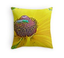 Solitary Bee On Black-Eyed Susan  -  Augochlora pura  -  Sweat Bee Throw Pillow