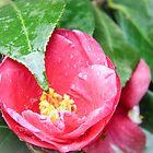 flower  by ddunson
