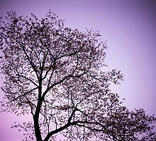 Purple Tree by ddunson