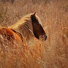 Wild Pony of Assateague Island by JHRphotoART