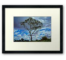 Loney Tree HDR Framed Print