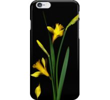 Daffodil / Jonquil ~ Narcissus Falling iPhone Case/Skin
