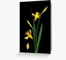 Daffodil / Jonquil ~ Narcissus Falling Greeting Card
