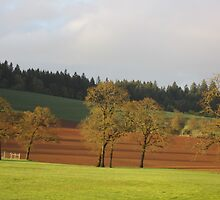 Winery, Dundee, OR by AuntieBarbie