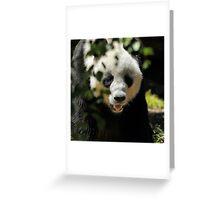 Giant Panda Greeting Card