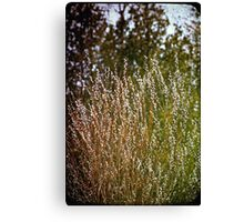 Willow Buds Canvas Print
