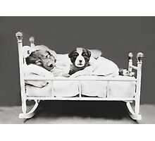 Harry Whittier Frees - The Insomniac Puppy Photographic Print