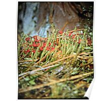Fungus on the Forrest Floor Poster