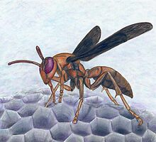 Paper Wasp - Watercolor Pencil Drawing by M Rogers